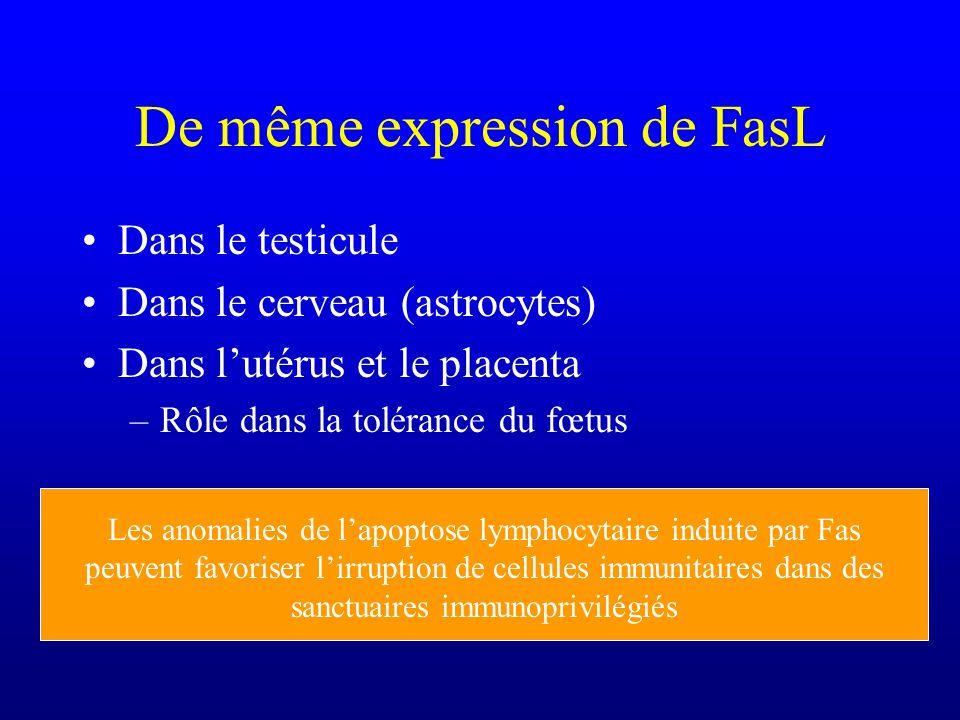 De même expression de FasL Dans le testicule Dans le cerveau (astrocytes) Dans lutérus et le placenta –Rôle dans la tolérance du fœtus Les anomalies d