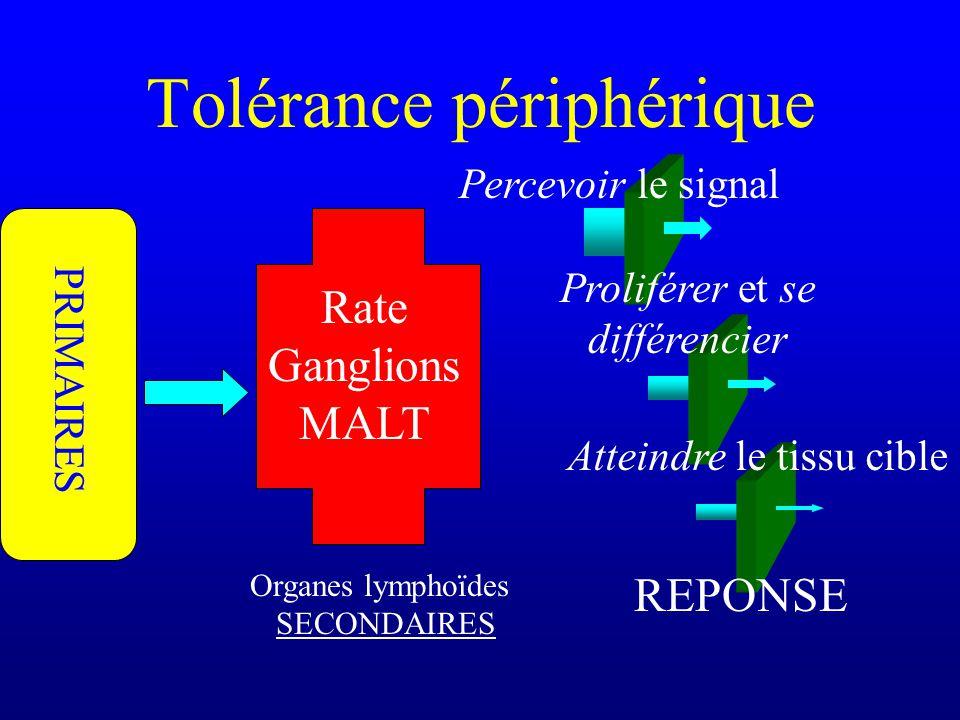Tolérance périphérique Organes lymphoïdes SECONDAIRES Rate Ganglions MALT PRIMAIRES Percevoir le signal Proliférer et se différencier Atteindre le tis