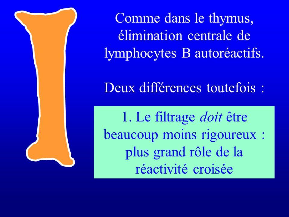 Comme dans le thymus, élimination centrale de lymphocytes B autoréactifs. Deux différences toutefois : 1. Le filtrage doit être beaucoup moins rigoure