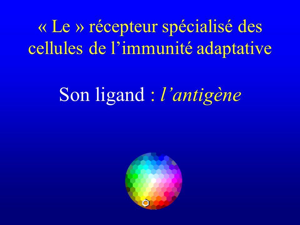 Son ligand : lantigène « Le » récepteur spécialisé des cellules de limmunité adaptative