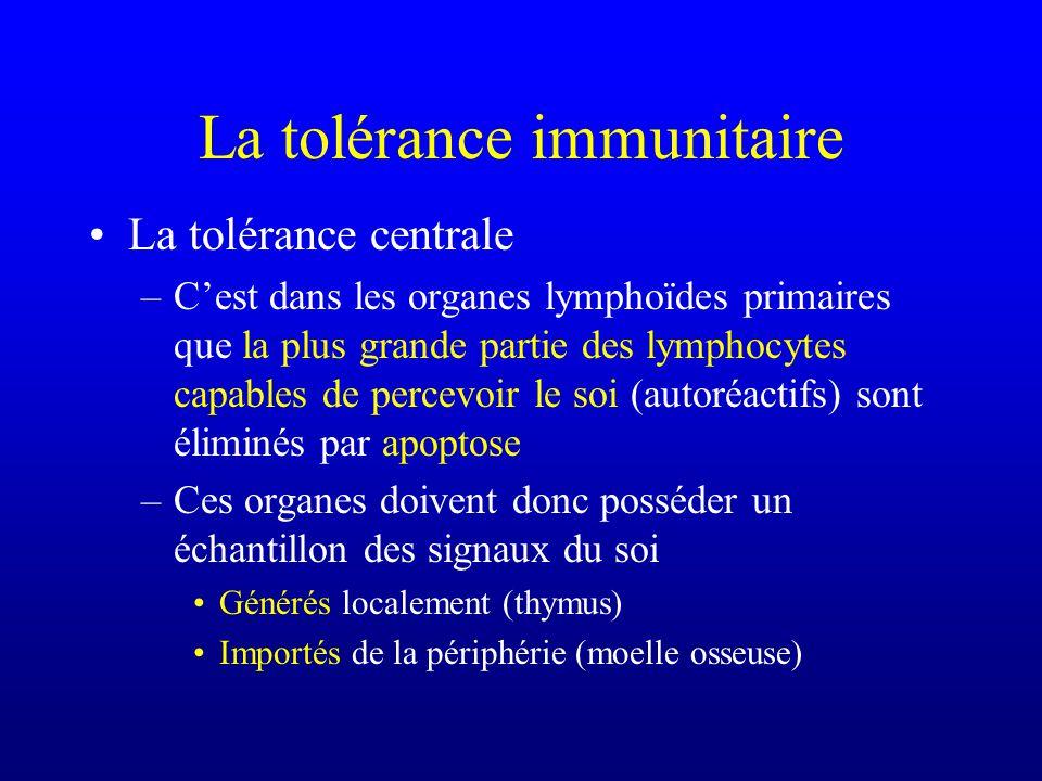 La tolérance immunitaire La tolérance centrale –Cest dans les organes lymphoïdes primaires que la plus grande partie des lymphocytes capables de perce