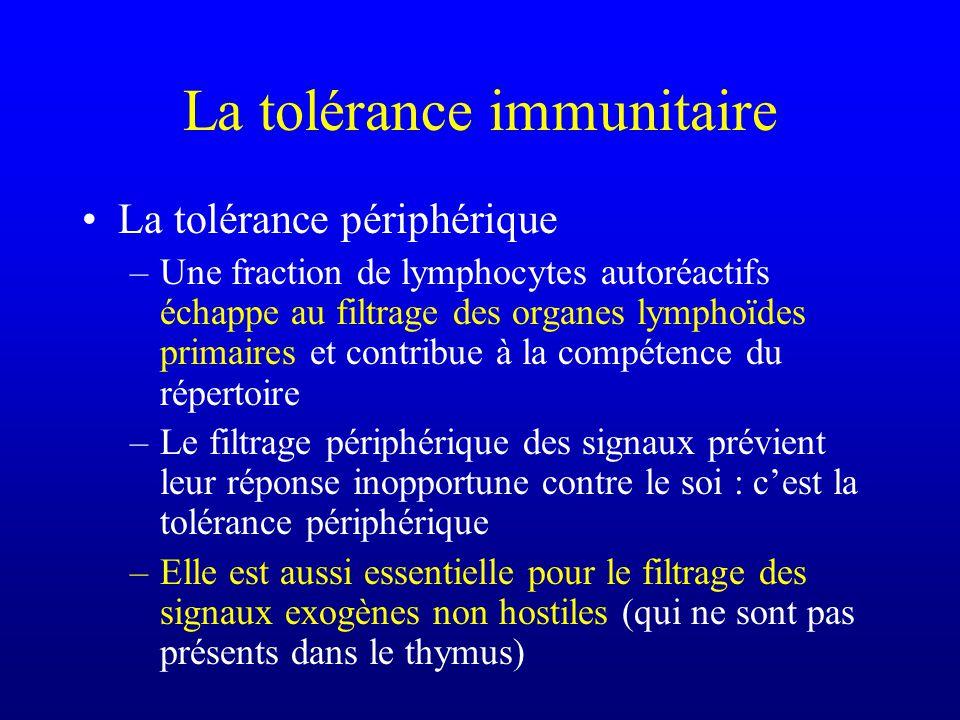 La tolérance immunitaire La tolérance périphérique –Une fraction de lymphocytes autoréactifs échappe au filtrage des organes lymphoïdes primaires et c
