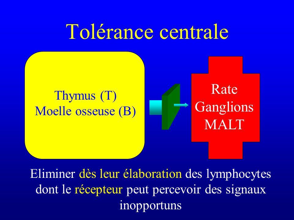 Tolérance centrale Thymus (T) Moelle osseuse (B) Rate Ganglions MALT Eliminer dès leur élaboration des lymphocytes dont le récepteur peut percevoir de