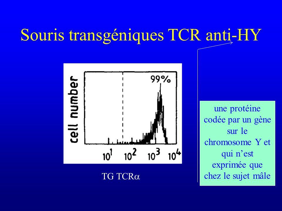 Souris transgéniques TCR anti-HY TG TCR une protéine codée par un gène sur le chromosome Y et qui nest exprimée que chez le sujet mâle
