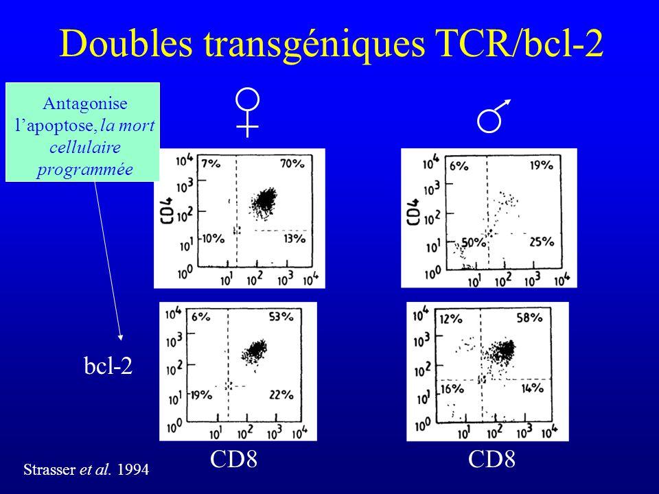 Doubles transgéniques TCR/bcl-2 CD8 Strasser et al. 1994 bcl-2 Antagonise lapoptose, la mort cellulaire programmée