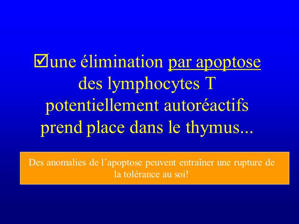 une élimination par apoptose des lymphocytes T potentiellement autoréactifs prend place dans le thymus... Des anomalies de lapoptose peuvent entraîner