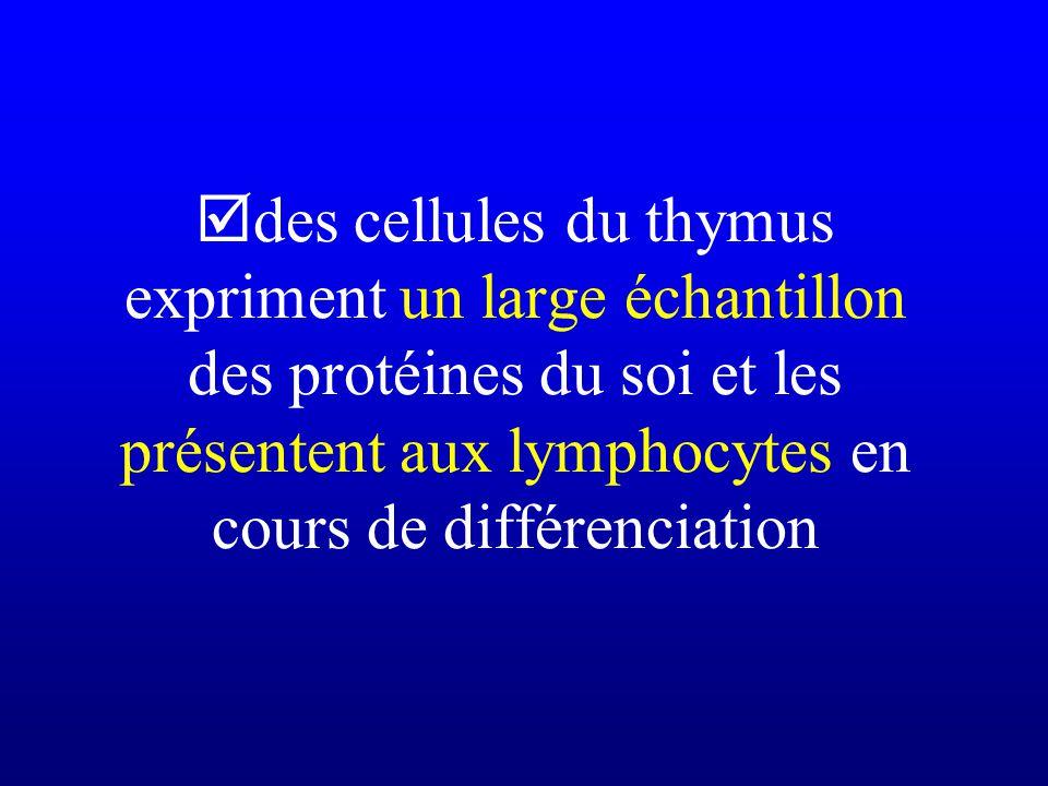 des cellules du thymus expriment un large échantillon des protéines du soi et les présentent aux lymphocytes en cours de différenciation