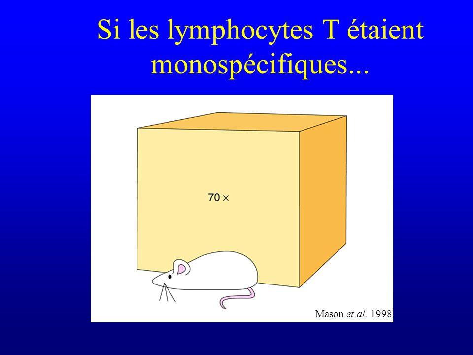 Si les lymphocytes T étaient monospécifiques... Mason et al. 1998