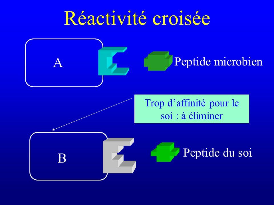 Réactivité croisée Peptide du soi Peptide microbien A B Trop daffinité pour le soi : à éliminer