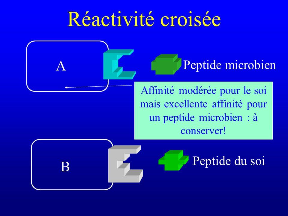 Réactivité croisée Peptide du soi Peptide microbien A B Affinité modérée pour le soi mais excellente affinité pour un peptide microbien : à conserver!