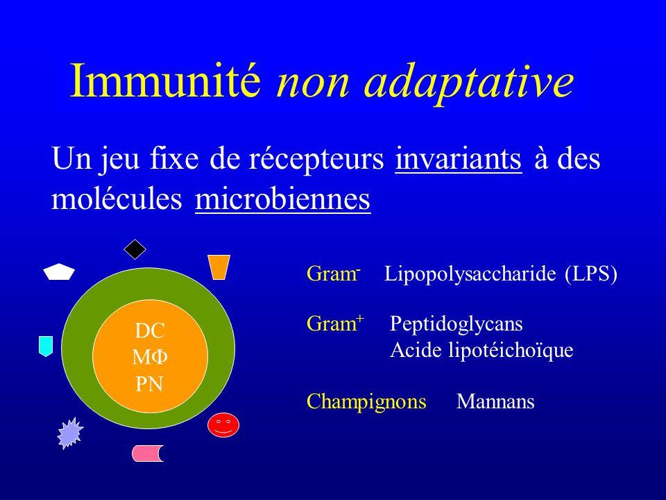 Interdire laccès de certains tissus aux lymphocytes T activés et potentiellement autoréactifs Tissus « immunoprivilégiés »