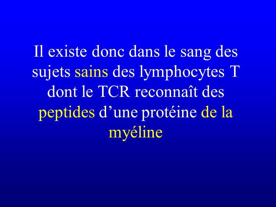 Il existe donc dans le sang des sujets sains des lymphocytes T dont le TCR reconnaît des peptides dune protéine de la myéline