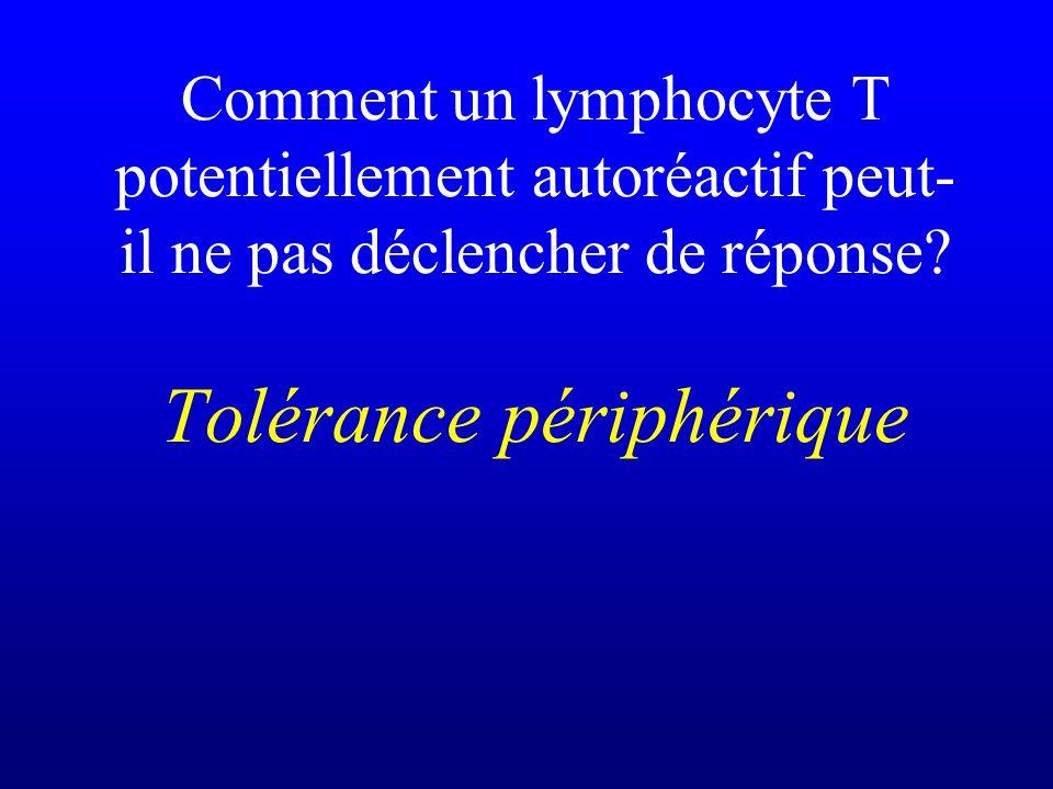 Comment un lymphocyte T potentiellement autoréactif peut- il ne pas déclencher de réponse? Tolérance périphérique