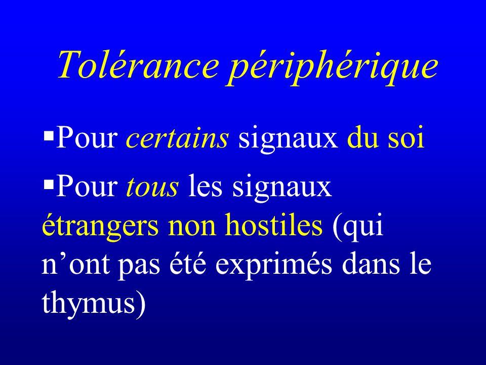 Tolérance périphérique Pour certains signaux du soi Pour tous les signaux étrangers non hostiles (qui nont pas été exprimés dans le thymus)
