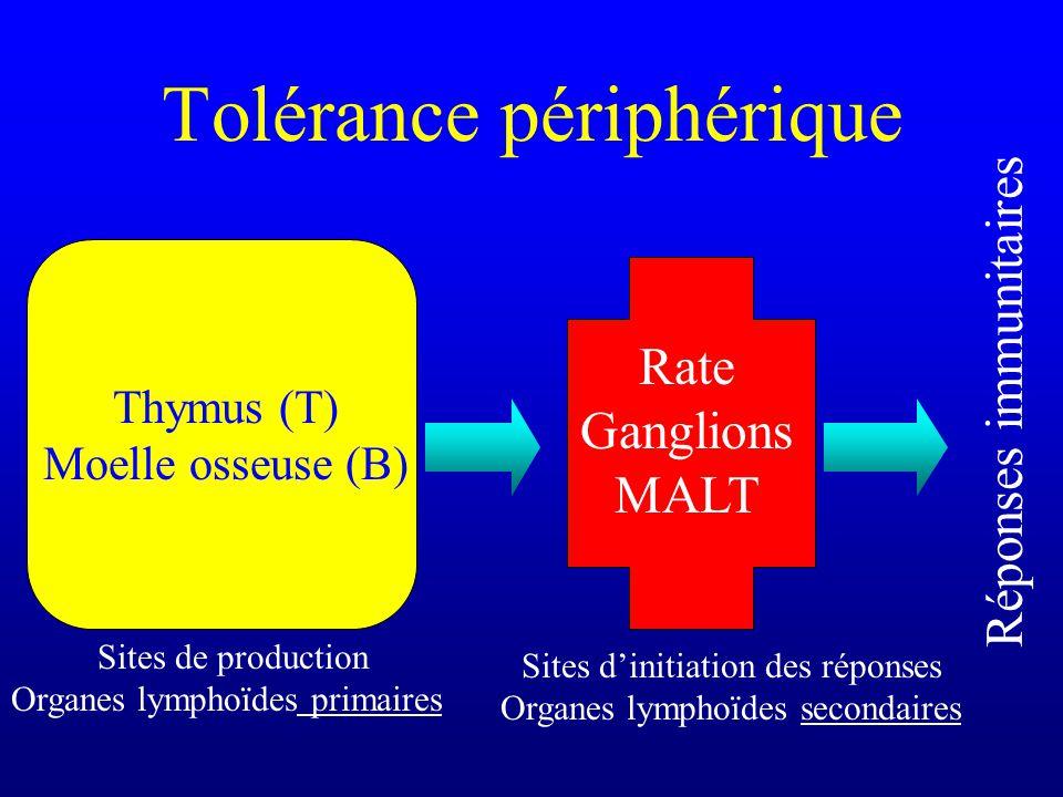 Tolérance périphérique Sites de production Organes lymphoïdes primaires Thymus (T) Moelle osseuse (B) Sites dinitiation des réponses Organes lymphoïde