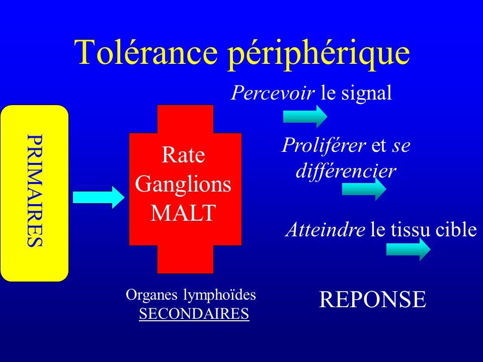 Tolérance périphérique Organes lymphoïdes SECONDAIRES Rate Ganglions MALT Proliférer et se différencier Atteindre le tissu cible PRIMAIRES REPONSE Per