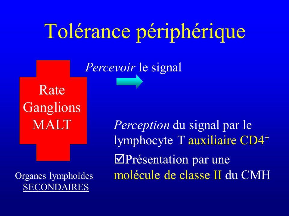 Tolérance périphérique Organes lymphoïdes SECONDAIRES Rate Ganglions MALT Percevoir le signal Perception du signal par le lymphocyte T auxiliaire CD4