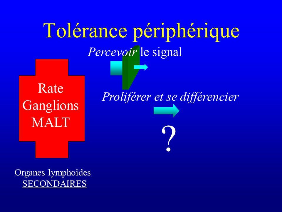 Tolérance périphérique Organes lymphoïdes SECONDAIRES Rate Ganglions MALT Proliférer et se différencier ? Percevoir le signal