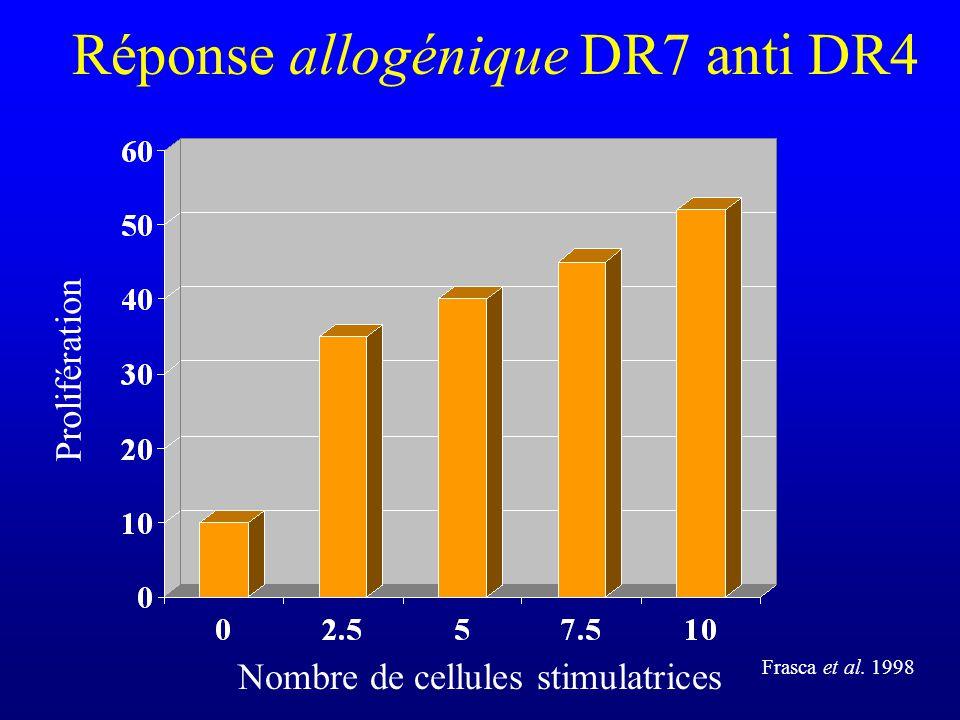 Réponse allogénique DR7 anti DR4 Prolifération Nombre de cellules stimulatrices Frasca et al. 1998