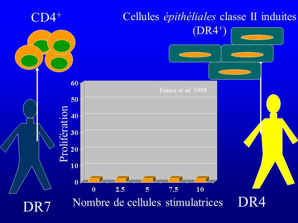 DR7 CD4 + DR4 Cellules épithéliales classe II induites (DR4 + ) Nombre de cellules stimulatrices Prolifération Frasca et al. 1998