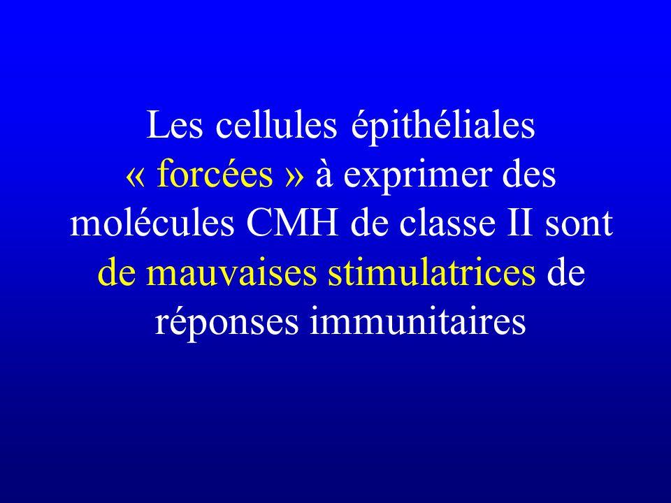 Les cellules épithéliales « forcées » à exprimer des molécules CMH de classe II sont de mauvaises stimulatrices de réponses immunitaires