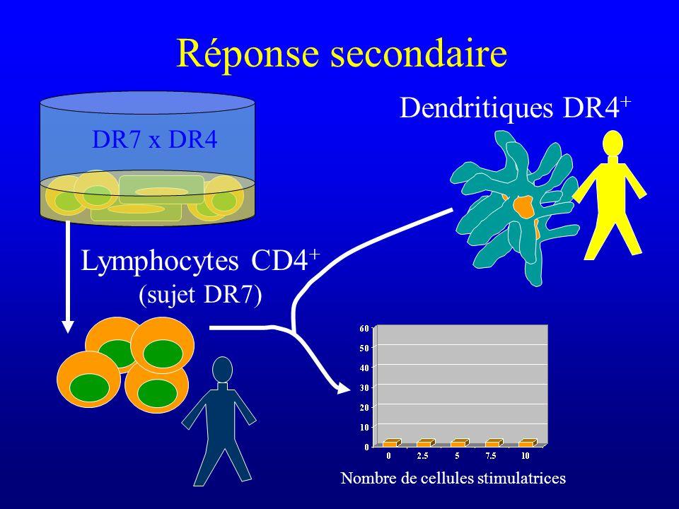 Réponse secondaire Lymphocytes CD4 + (sujet DR7) Dendritiques DR4 + Nombre de cellules stimulatrices DR7 x DR4