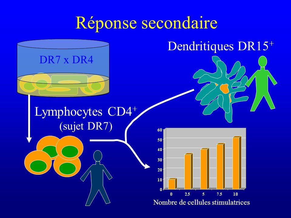 Réponse secondaire Lymphocytes CD4 + (sujet DR7) Dendritiques DR15 + Nombre de cellules stimulatrices DR7 x DR4