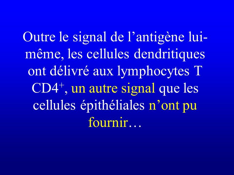 Outre le signal de lantigène lui- même, les cellules dendritiques ont délivré aux lymphocytes T CD4 +, un autre signal que les cellules épithéliales n
