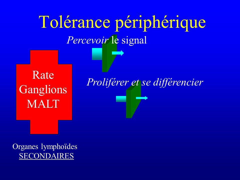 Tolérance périphérique Organes lymphoïdes SECONDAIRES Rate Ganglions MALT Percevoir le signal Proliférer et se différencier