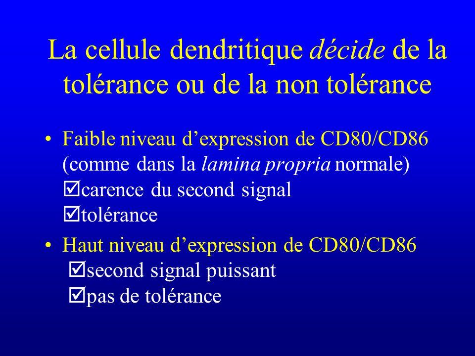 La cellule dendritique décide de la tolérance ou de la non tolérance Faible niveau dexpression de CD80/CD86 (comme dans la lamina propria normale) car