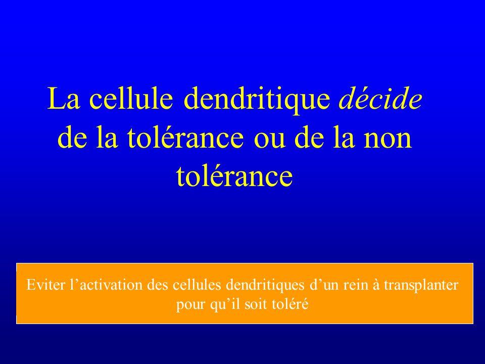 La cellule dendritique décide de la tolérance ou de la non tolérance Activer les cellules dendritiques pour faire de bons vaccins (adjuvants) Eviter l