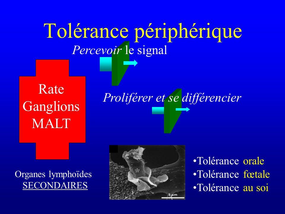 Tolérance périphérique Organes lymphoïdes SECONDAIRES Rate Ganglions MALT Tolérance orale Tolérance fœtale Tolérance au soi Proliférer et se différenc