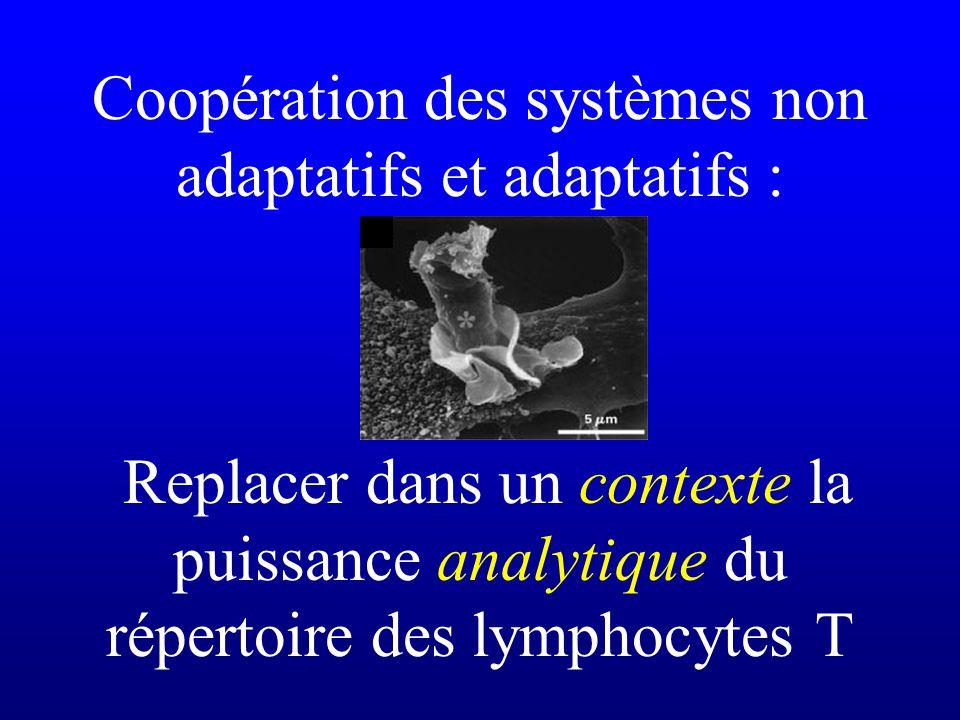 Coopération des systèmes non adaptatifs et adaptatifs : Replacer dans un contexte la puissance analytique du répertoire des lymphocytes T