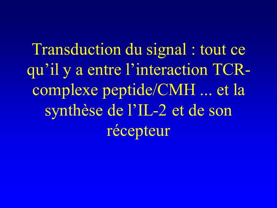 Transduction du signal : tout ce quil y a entre linteraction TCR- complexe peptide/CMH... et la synthèse de lIL-2 et de son récepteur