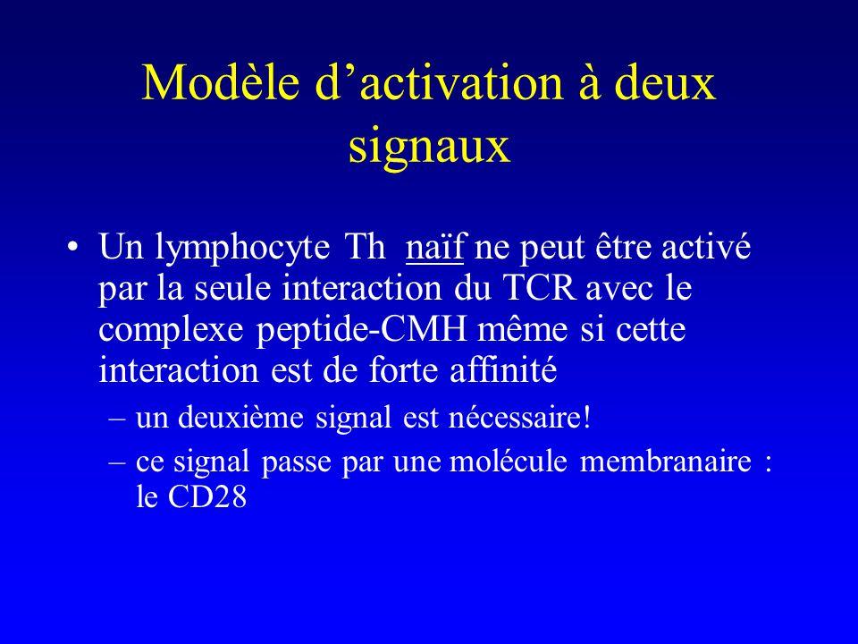 Modèle dactivation à deux signaux Un lymphocyte Th naïf ne peut être activé par la seule interaction du TCR avec le complexe peptide-CMH même si cette