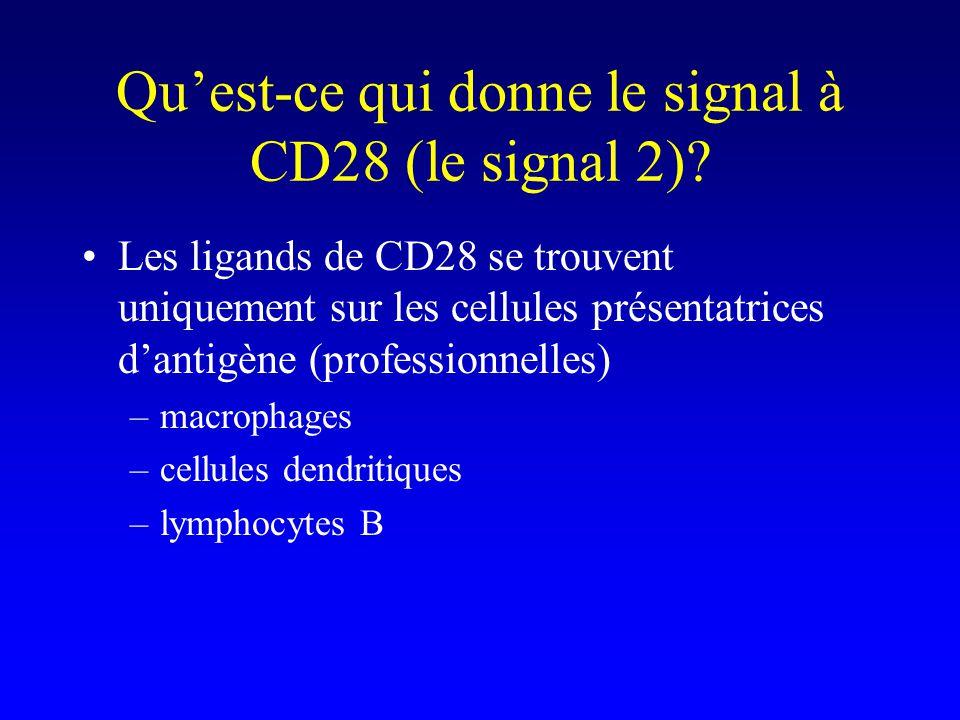 Quest-ce qui donne le signal à CD28 (le signal 2)? Les ligands de CD28 se trouvent uniquement sur les cellules présentatrices dantigène (professionnel