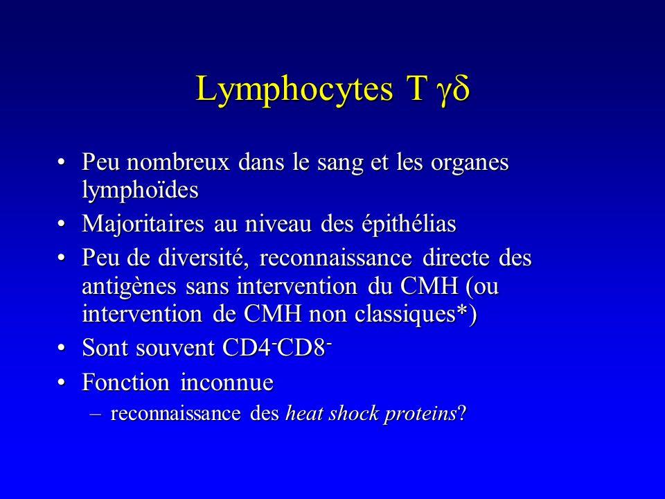 Peu nombreux dans le sang et les organes lymphoïdesPeu nombreux dans le sang et les organes lymphoïdes Majoritaires au niveau des épithéliasMajoritair