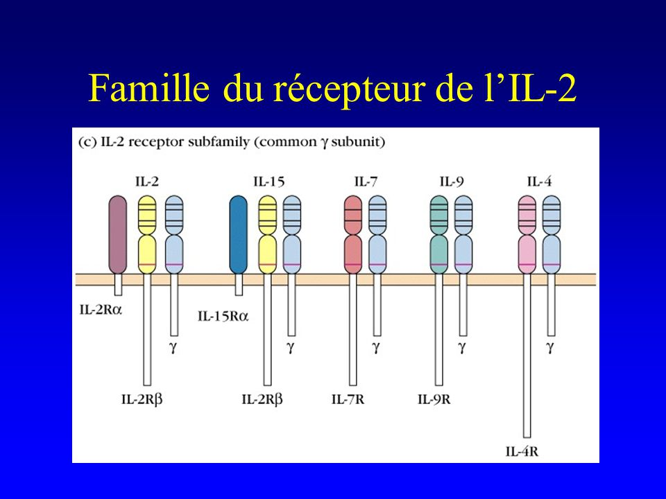 Famille du récepteur de lIL-2