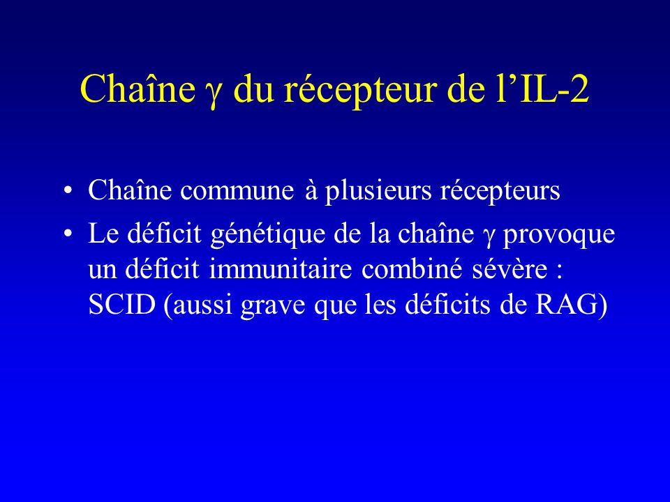 Chaîne du récepteur de lIL-2 Chaîne commune à plusieurs récepteurs Le déficit génétique de la chaîne provoque un déficit immunitaire combiné sévère :