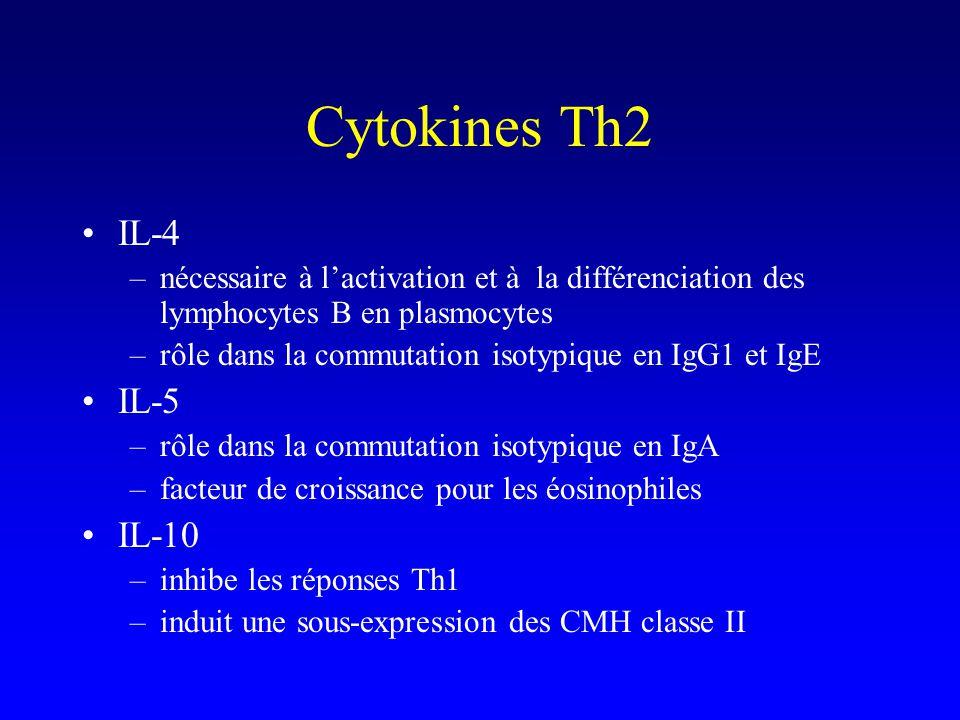 Cytokines Th2 IL-4 –nécessaire à lactivation et à la différenciation des lymphocytes B en plasmocytes –rôle dans la commutation isotypique en IgG1 et