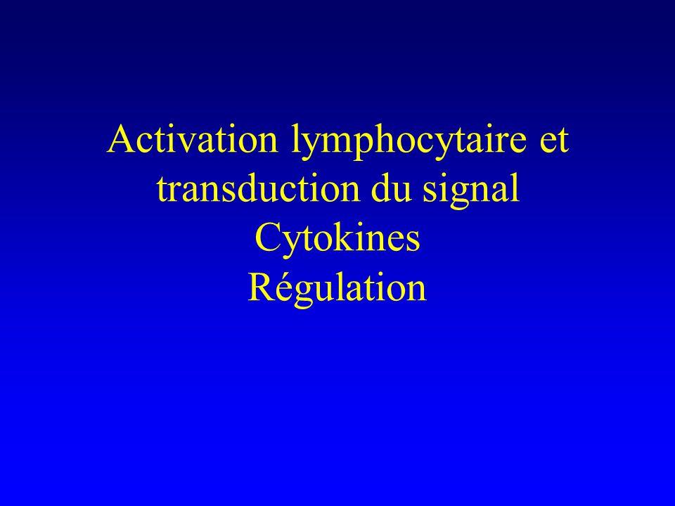 Activation des lymphocytes CD4 + (Th) Input : une interaction daffinité suffisante entre le TCR et le complexe peptide-CMH Output : la transcription de multiples gènes –immédiats –précoces –tardifs Conséquences : prolifération, sécrétion de cytokines, expression de récepteurs membranaires