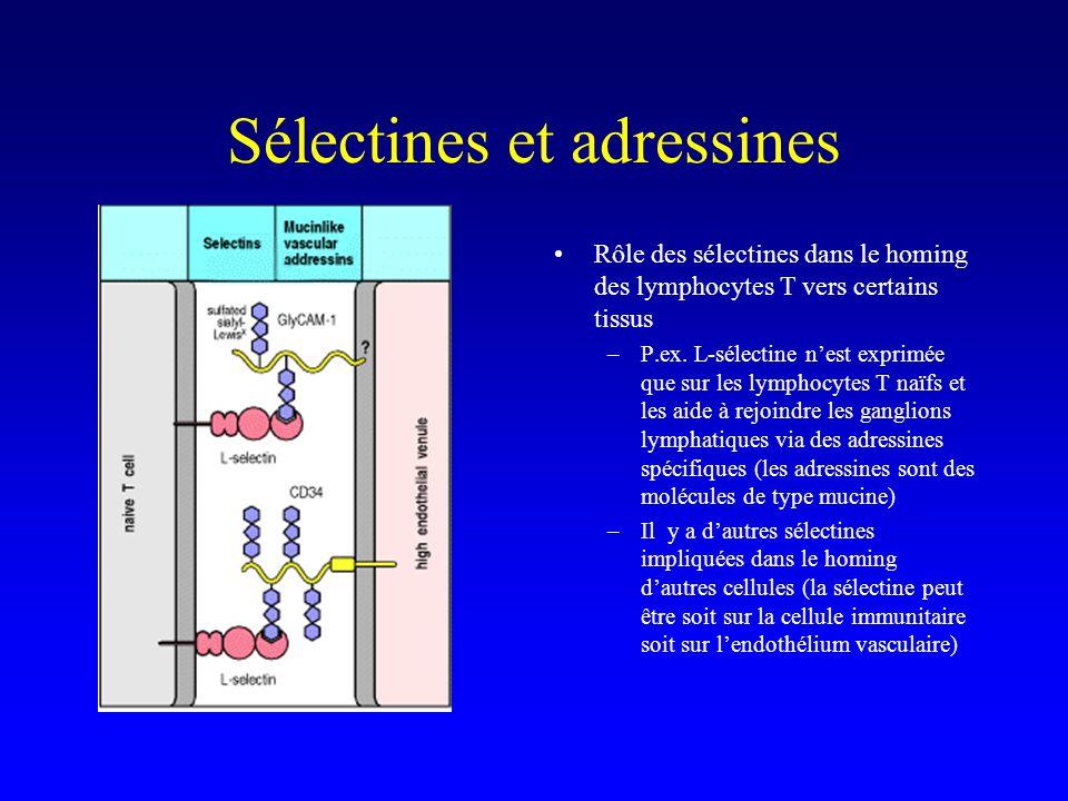 Sélectines et adressines Rôle des sélectines dans le homing des lymphocytes T vers certains tissus –P.ex. L-sélectine nest exprimée que sur les lympho