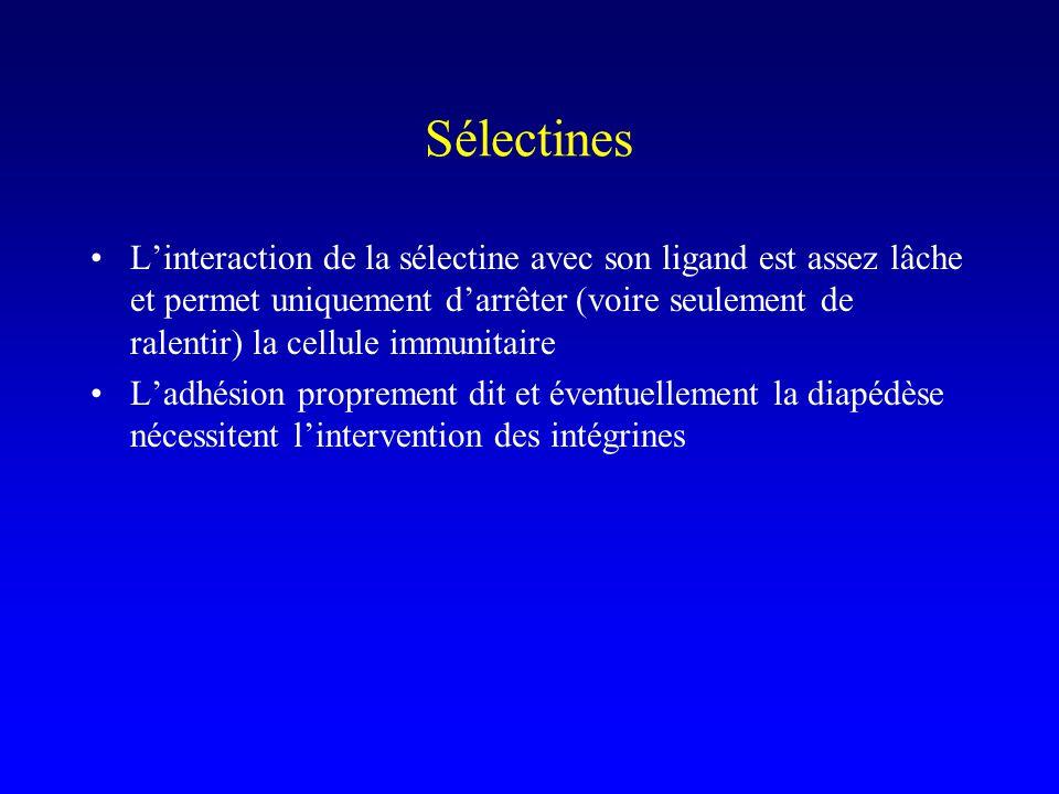 Sélectines Linteraction de la sélectine avec son ligand est assez lâche et permet uniquement darrêter (voire seulement de ralentir) la cellule immunit
