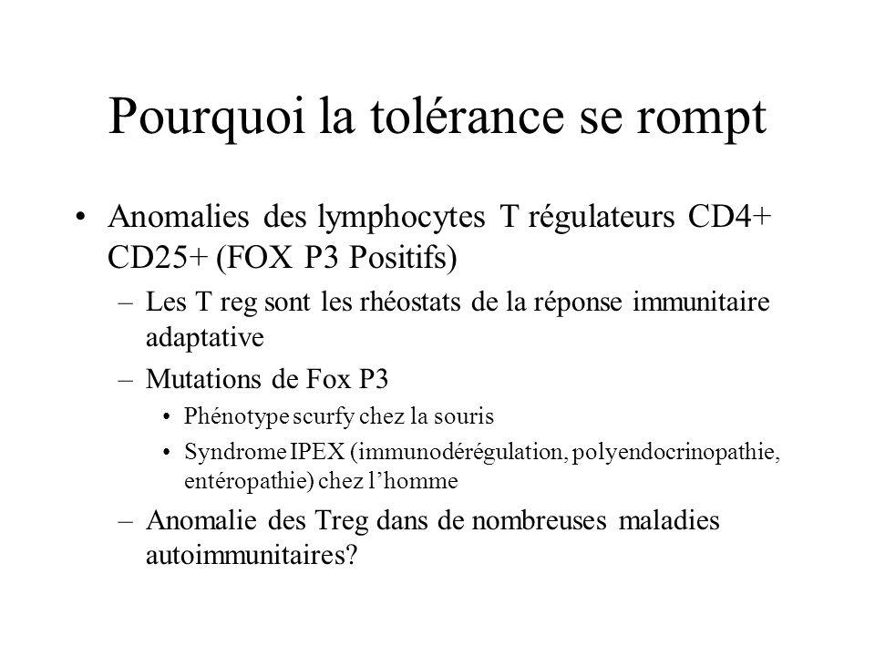 Pourquoi la tolérance se rompt Anomalies des lymphocytes T régulateurs CD4+ CD25+ (FOX P3 Positifs) –Les T reg sont les rhéostats de la réponse immunitaire adaptative –Mutations de Fox P3 Phénotype scurfy chez la souris Syndrome IPEX (immunodérégulation, polyendocrinopathie, entéropathie) chez lhomme –Anomalie des Treg dans de nombreuses maladies autoimmunitaires?