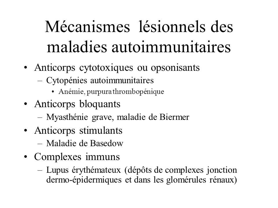 Mécanismes lésionnels des maladies autoimmunitaires Anticorps cytotoxiques ou opsonisants –Cytopénies autoimmunitaires Anémie, purpura thrombopénique Anticorps bloquants –Myasthénie grave, maladie de Biermer Anticorps stimulants –Maladie de Basedow Complexes immuns –Lupus érythémateux (dépôts de complexes jonction dermo-épidermiques et dans les glomérules rénaux)