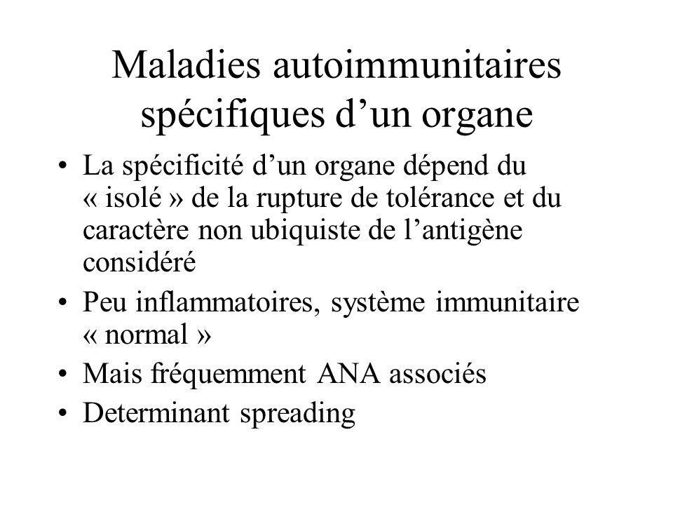 Maladies autoimmunitaires spécifiques dun organe La spécificité dun organe dépend du « isolé » de la rupture de tolérance et du caractère non ubiquiste de lantigène considéré Peu inflammatoires, système immunitaire « normal » Mais fréquemment ANA associés Determinant spreading