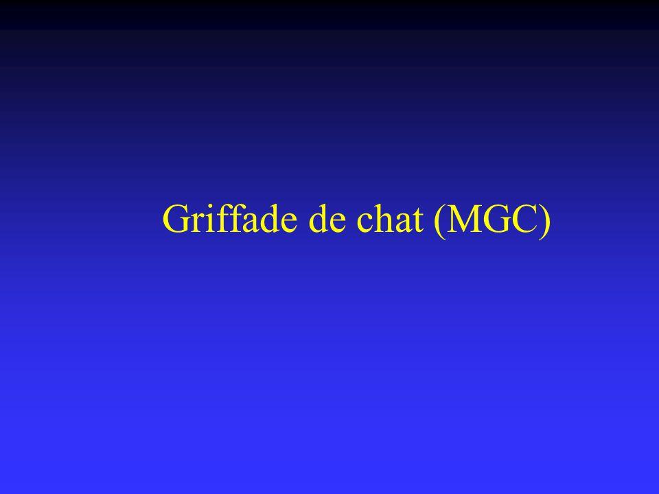 Griffade de chat (MGC)