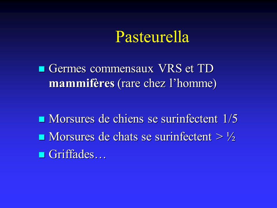 Pasteurella Germes commensaux VRS et TD mammifères (rare chez lhomme) Germes commensaux VRS et TD mammifères (rare chez lhomme) Morsures de chiens se