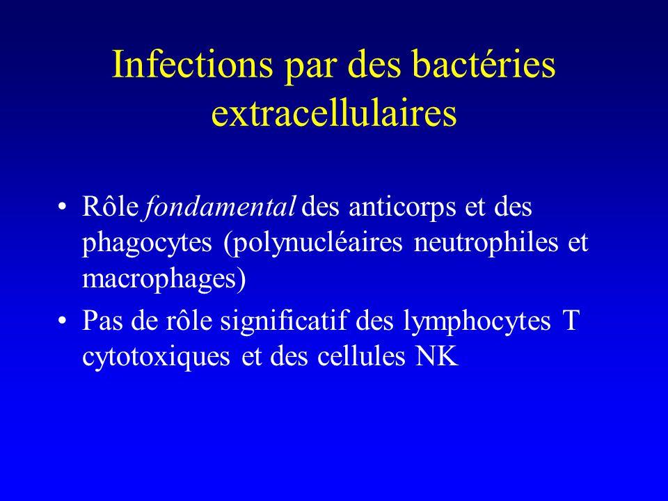 Infections par des bactéries extracellulaires Rôle fondamental des anticorps –Oui mais ne pas oublier les lymphocytes T CD4 + auxiliaires qui permettent leur commutation isotypique et leur maturation daffinité (Th2)