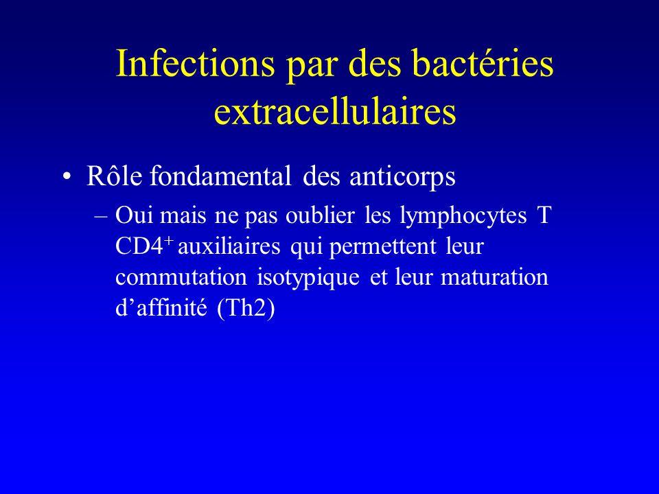 Anticorps et bactéries extracellulaires p.ex. diphtérie, tétanos